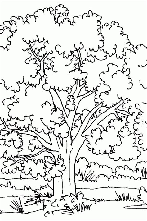 coloring pictures of flowers and trees coloring book trees coloring home