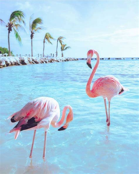 flamingo wallpaper nyc 811 best places to visit images on pinterest new york