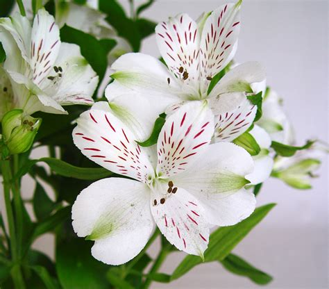 Beautiful Kitchen Ideas by Alstroemeria Flowers