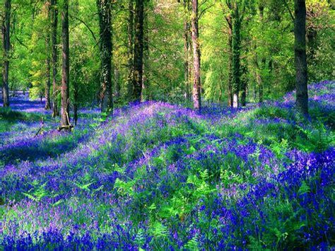 imagenes de bosques increibles fotos hd de bosques encantados fondos de paisajes