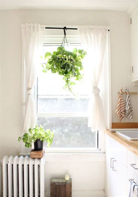 plant curtains the dishtowels the plant hanging from the curtain rod