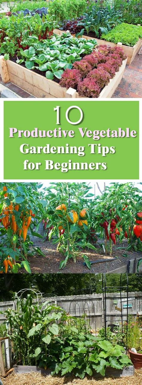 how to start a vegetable garden for beginners beginner s guide for productive vegetable garden gardens
