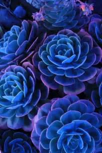 Blue cactus more cactus succulent beautiful flower blue blue blue