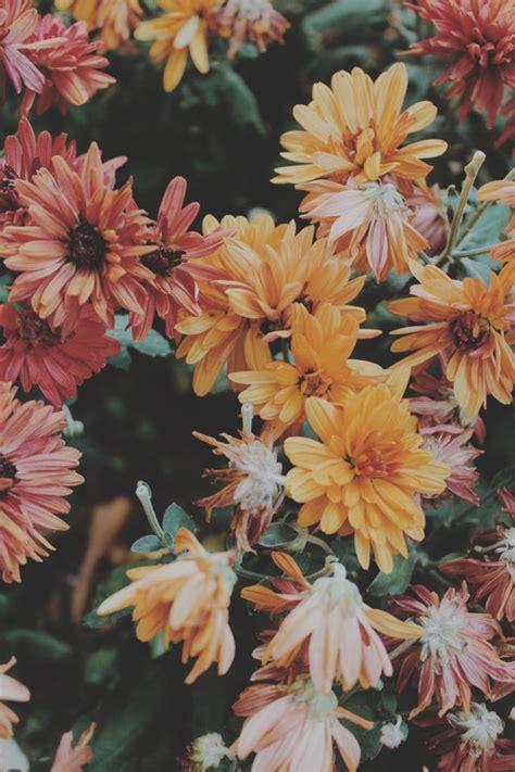wallpaper tumblr vintage hipster vintage flowers on tumblr tumblr