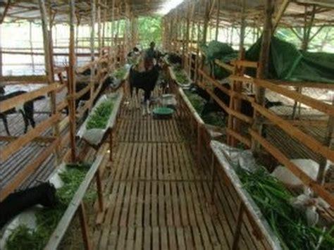 Home Design In Tamilnadu Style goat farm kukil farms youtube