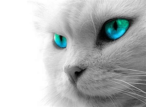 canile comunale pavia festa gatto 2015 pavia in un click