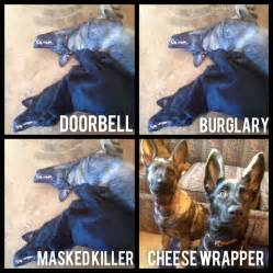 Doorbell burglary or masked killer they do nothing cheese wrapper