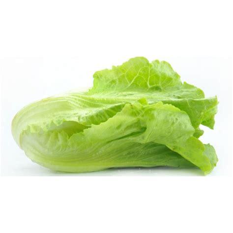 imagenes lechugas verdes lattuga quale scegliere ricetta blog