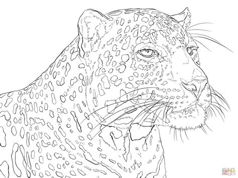 Portrait Of Indian Leopard Coloring Page Free Printable Leopard Coloring Page