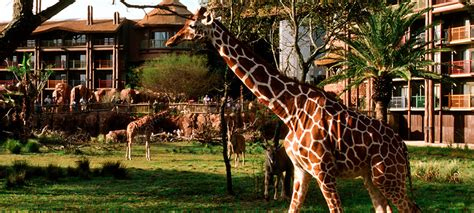DISNEYS ANIMAL KINGDOM LODGE   Voyages Destination