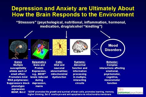 can antidepressants cause mood swings genes stress nutrition and antidepressants how they