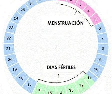 uno puede salir embarazada con la menstruacion 191 sabe c 243 mo identificar tu periodo f 233 rtil ciclo