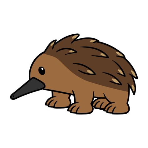 royalty free echidna clip vector images
