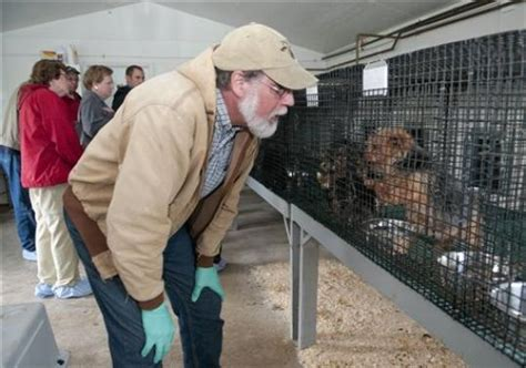 how to report a puppy mill puppy mill progress in pennsylvania