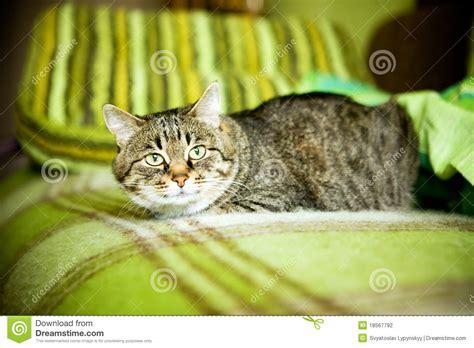 katze uriniert auf sofa h 228 ssliche katze die auf sofa sitzt