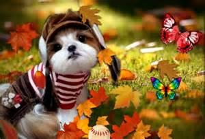 tomboy dogs amp animals background wallpapers desktop nexus image 1637505