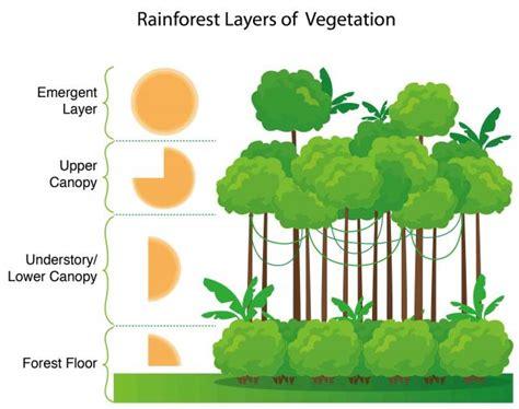 rainforest diagram expedition earth deforestation