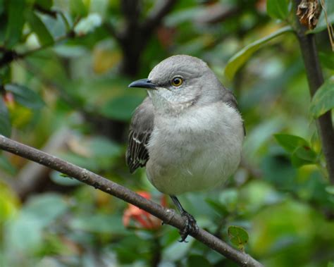 list of birds of florida wikipedia