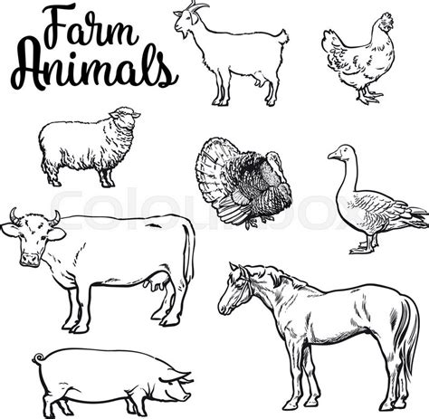 farm animals cow pig chicken goose poultry livestock