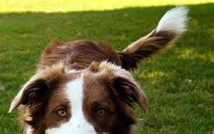 a wagging means the is happy wagging what does it siowfa15 science in our world certainty and