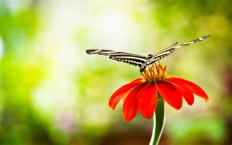 wallpaper flower butterfly butterfly and flower wallpapers wallpaper cave