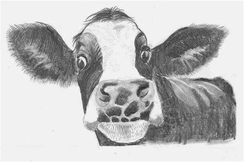 Imagenes De Vacas A Lapiz | toros dibujos a lapiz imagui