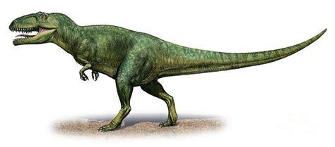Shark Duvet Cover Giganotosaurus Carolinii A Prehistoric Digital Art By