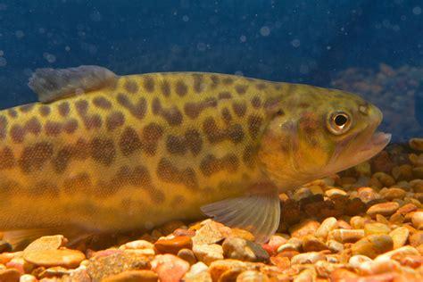 and fish az arizona trout fishing fishazblog