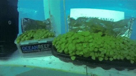 underwater greenhouses      future  pics