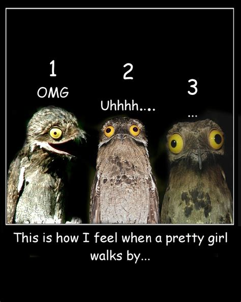 Funny Owl Memes - pin by wise owl on wise owl memes pinterest