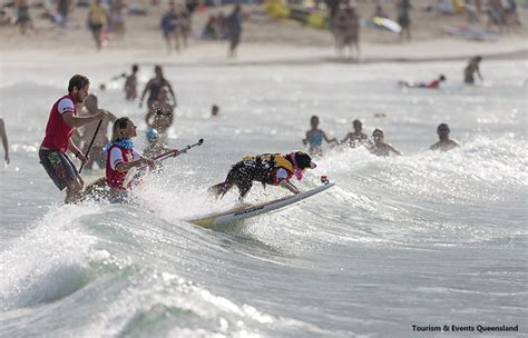 the worlds best cities for surfers noosa stab magazine 9 amazing things to do in noosa and sunshine coast