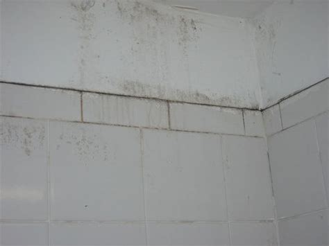 white mold in bathroom 3rd floor bathroom mold and mildew andrew ratto flickr