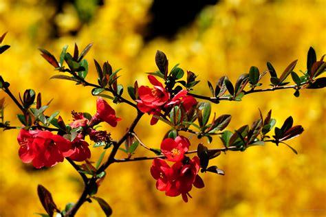 desktop gratis fiori 2736 x 1824 primavera sfondi fiori immagini di sfondo
