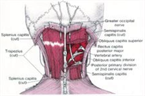 severe neck pain after c section 1000 images about trigeminal neuralgia and tmj on