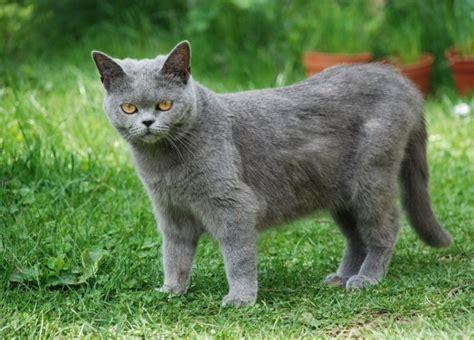 Angst Vor Katzen 4356 angst vor katzen darum haben katzen so schreckliche angst