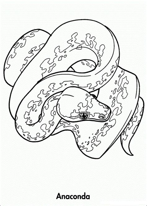 Rainforest Animals Coloring Pages by Free Coloring Pages Of Rainforest Animals