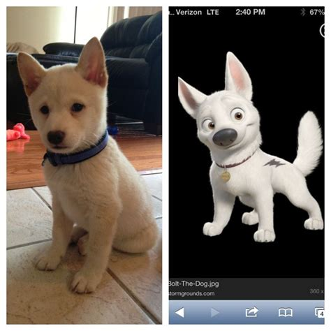 puppy that looks real 8 real counterparts of characters