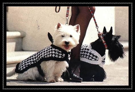 knitting pattern for westie dog coat knitting patt dogs checked coats fit westie size dog