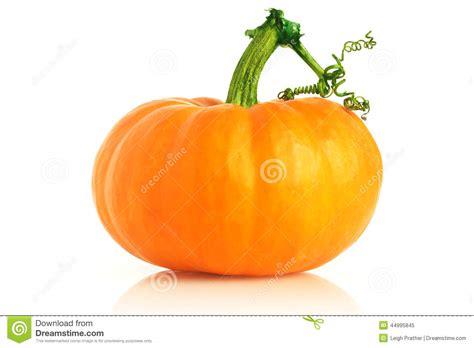 fresh pumpkin stock photo image 44995845