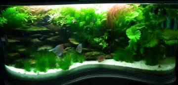 home design stunning 360 degree saltwater aquarium