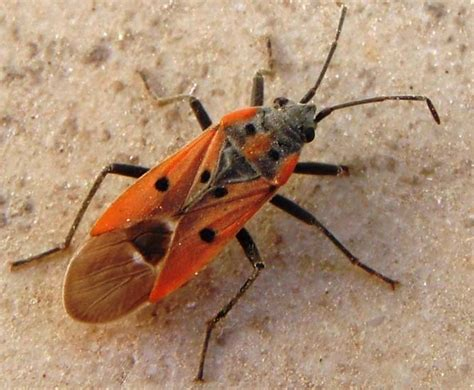 search for bed bugs bug images reverse search