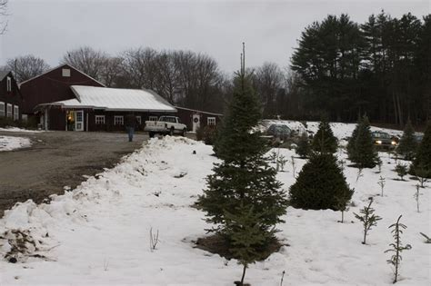 christmas tree farms rhode island best template collection