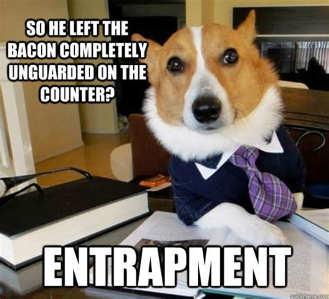 Dog Lawyer Meme - the hilarious lawyer dog meme 20 pics izismile com