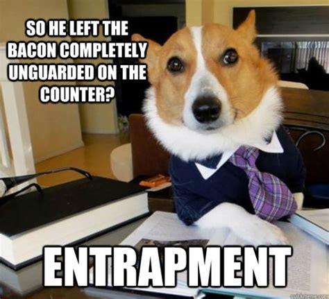 Lawyer Dog Meme - the hilarious lawyer dog meme 20 pics izismile com