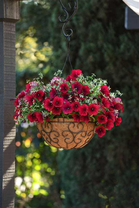 hanging flower planters best 25 hanging flower baskets ideas on