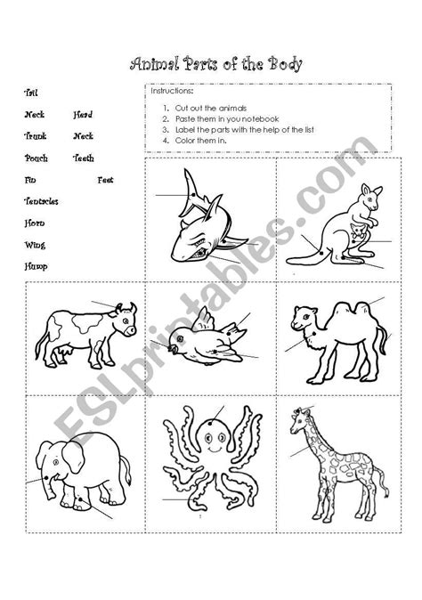 Animal parts of the body - ESL worksheet by gaby_mn