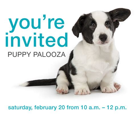 petsmart puppy school petsmart puppy palooza february 20 2016 the rock