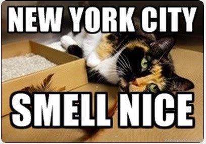 New Cat Memes - newyork memes image memes at relatably com