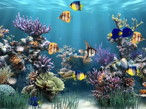 free animated desktop backgrounds for xp windows moving fish tank wallpaper