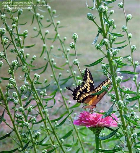 imagenes mariposas naturaleza 17 mejores im 225 genes sobre mariposas en pinterest alas